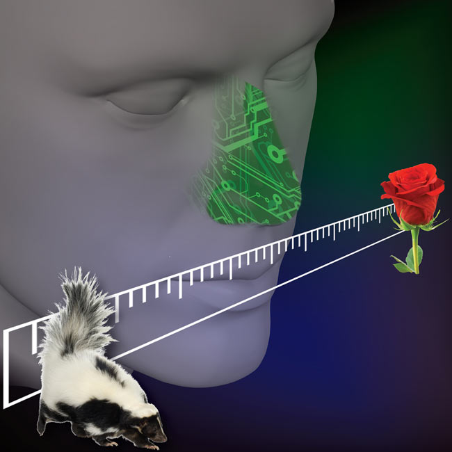 An electronic nose was tuned to the perceptual axis of odorant pleasantness, i.e., an axis ranging from very pleasant (e.g., rose) to very unpleasant (e.g., skunk).